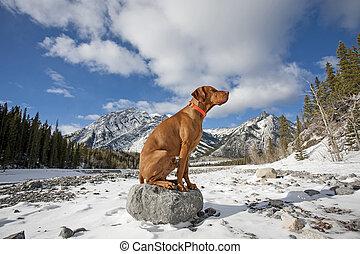 dog like a statue