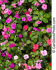 Flower bed - Different coloured flowers in a garden bed