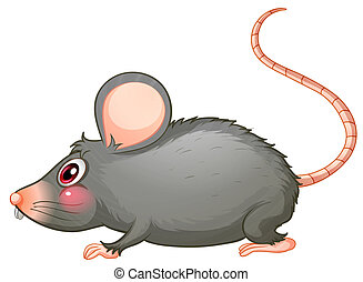A gray rat - Illustration of a gray rat on a white...
