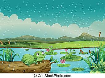 três, rãs, desfrutando, pingos chuva