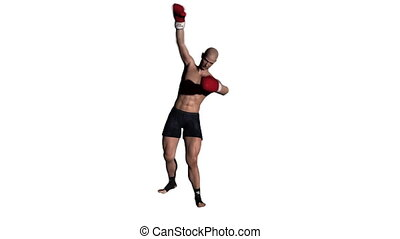 boxer - image of boxer