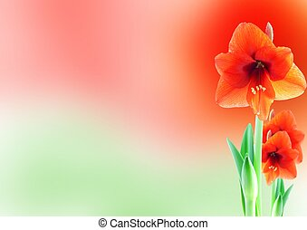 amaryllis background - a background with red amaryllis...