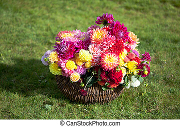 Bouquet of Dahlia flowers - Multicolored bouquet of Dahlia...