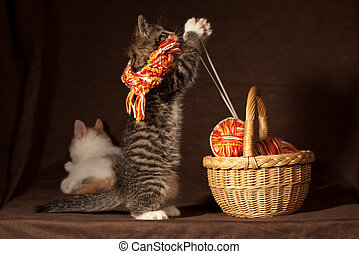 Kitten playing - Small kitten playing with balls of threads...