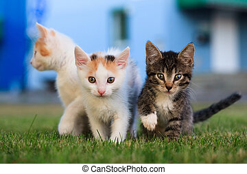 Three kitten sitting on the grass and looking curious