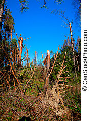 Ravage of the squall - Debris of trees in the forest after...