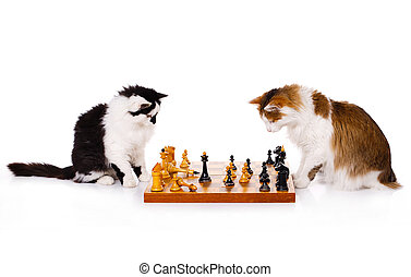 Two cats playing chess against the white background