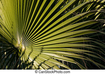 Palm tree leaf - Green leaf of the palm tree in the tropics