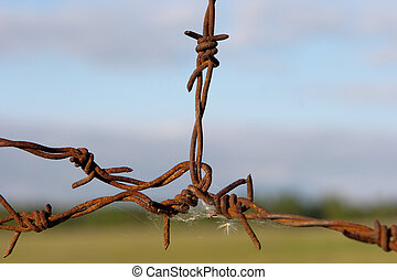 Barb wire - Old rusted barb wire