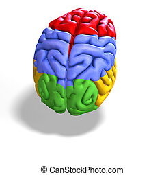 colored brain - schematic illustration of a human brain with...