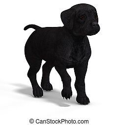 cute puppy labrador - very cute young dog over white with...