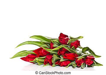red tulips - beautiful fresh red tulips on a white...