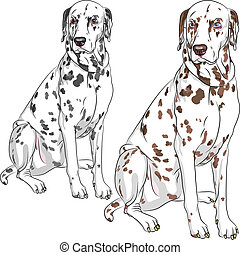 vector set dog Dalmatian breed sitting - Sketch of the...