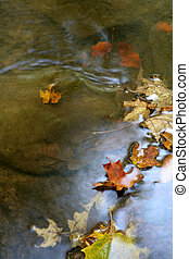 Autumn Leaf Shimmer - A bunch of maple leaves in a stream in...