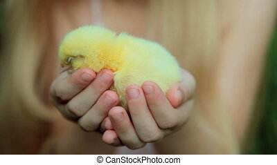 Hands of child holding chicken