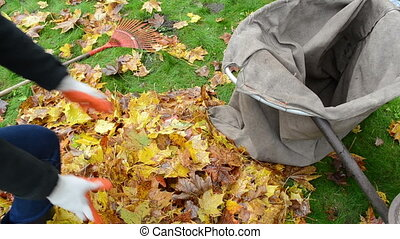 woman load barrow leaves - closeup woman hands gloves load...