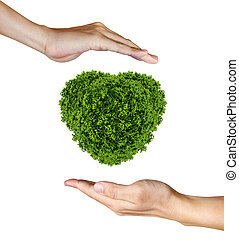 Heart Plant in the human hands on white background