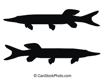 Pike - Two silhouettes of the pike on white background