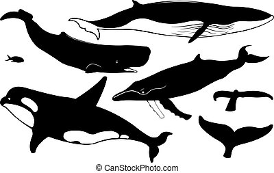 whales - set of different whales isolated