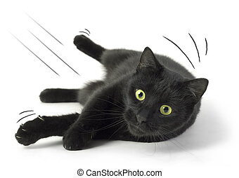 Fallen Cat - A Black Cat falling on the white background