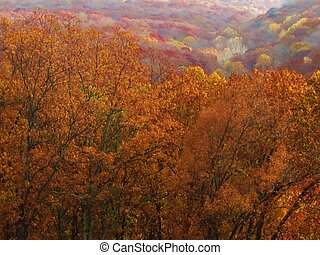 Indiana Fall Vista - Autumn trees over looking distant...