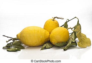 yellow sicilian fresh lemons isolated on a white background