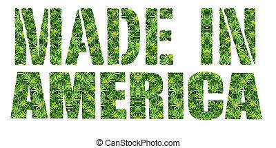 fatto,  Marijuana,  America