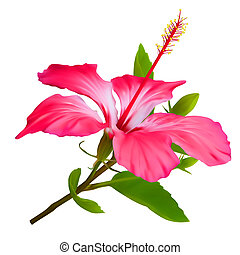 Flower Hibiscus Hawaiian aloha tropical plant