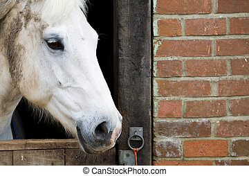 Horse in stable - Closeup of a white horse behind a stable...