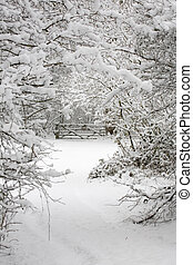 Trees and gate in snow - A gate and trees covered in snow in...
