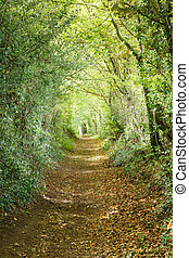Tree tunnel - Trees leading down a country footpath in an...