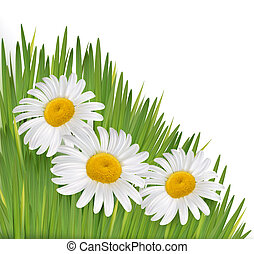 Nature background with beautiful flowers.Vector illustration
