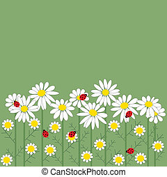 Chamomile flowers on green background