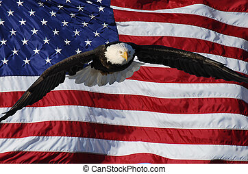 Flying Eagle with flag - Bald Eagle flying in front of...