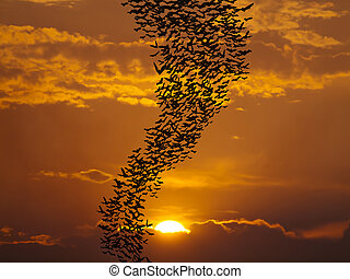 Bats flying againt sun and golden sky may use for horrible...
