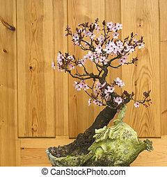 bonsai, flor, ciruela, japonés,  cerasifera),  (prunus