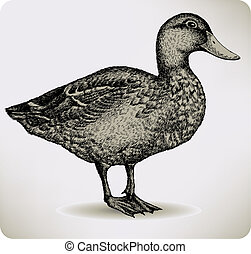 Bird duck, hand-drawing. Vector illustration.