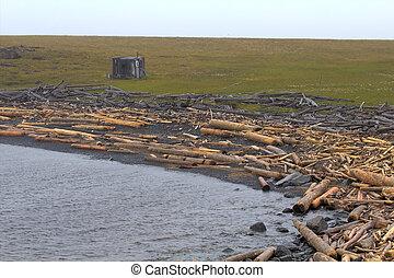 the ruined wood on ocean coasts - the unused ruined wood on...