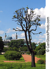 trimmed tree against a blue sky and a mosque - Trimmed tree...