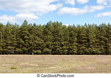 Tree Line at Meadow - Tree Line behind a meadow at...