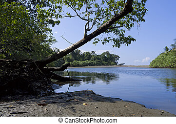 Sirena River Banks at Corcovado National Park - Sirena River...