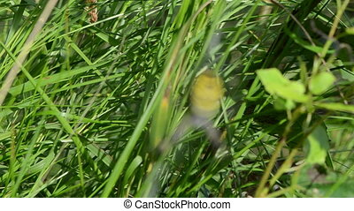 grass wasp spider web - defocus blur meadow grass and wasp...