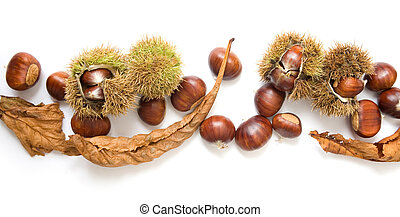 Autumn banner of chestnuts isolated on white