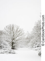 Snow covered trees in a winter woodland scene