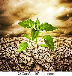 Dead earth - green sprout from dead soil