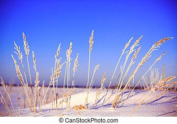 capim, Inverno, paisagem