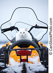 white cat on snowmobile