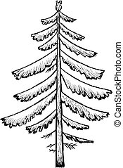 spruce - Hand drawn, vector, cartoon illustration of spruce