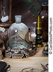 Vintage still life with Royal Python