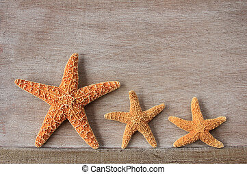 Starfish from the North Sea - Starfish Asterias rubens from...